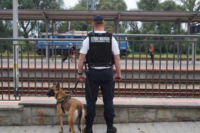 Anonimowy świadek i strażnicy miejscy pomogli porzuconemu psu